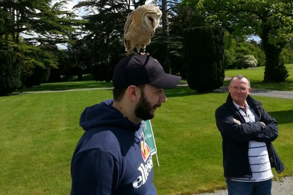 Owl standing on a mans head during Falconry Display