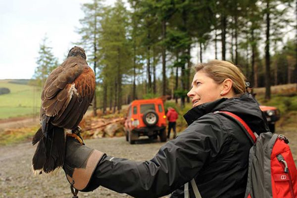 Woman holding a bird during Falconry Display